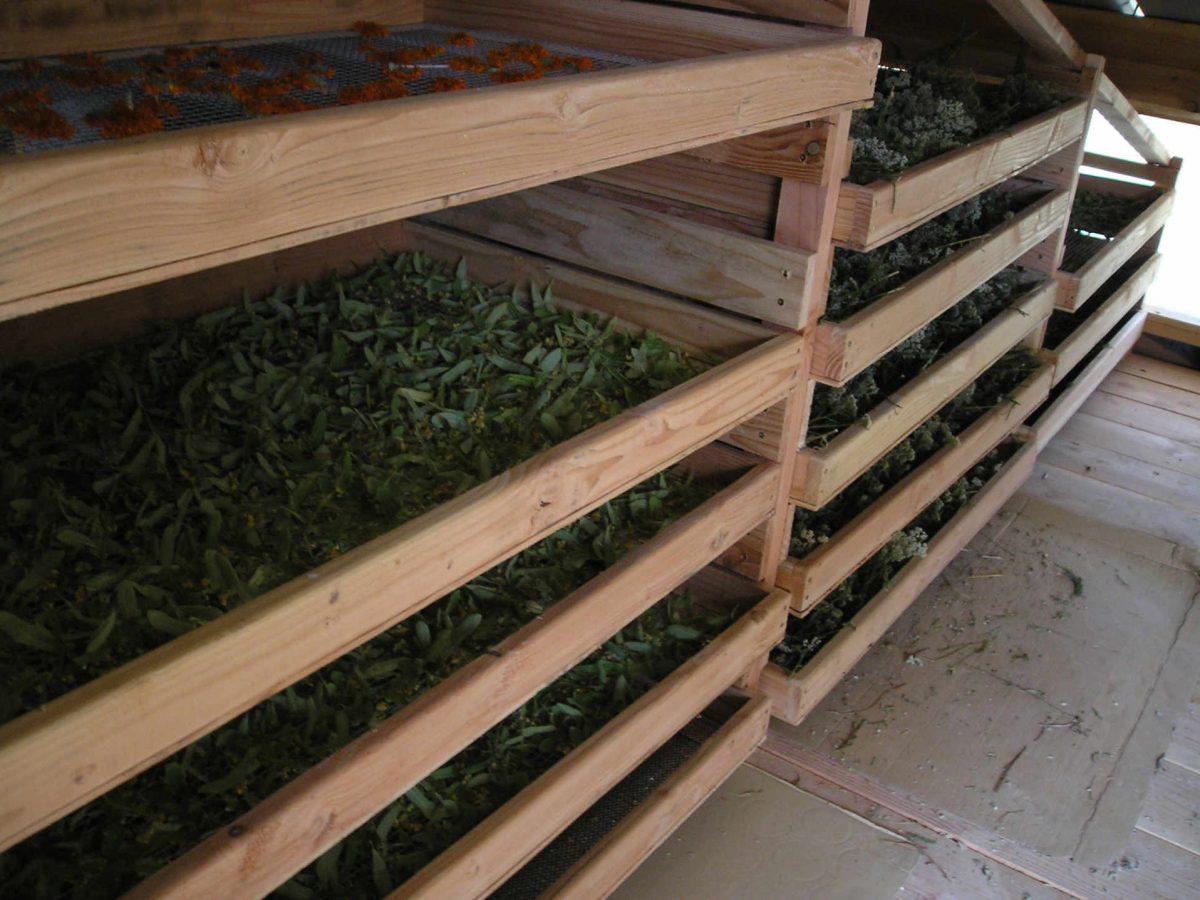 Plantes aromatiques et médicinales : Le séchage.