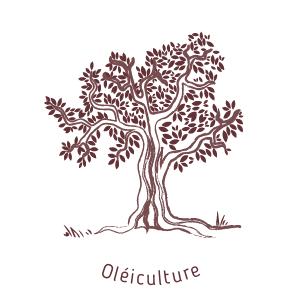 Oléiculture au moulin de mon père-biodiversité et équilibre écologique