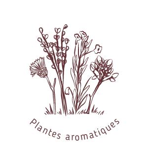 Plantes aromatiques et médicinales-au moulin de mon père-biodiversité et équilibre écologique