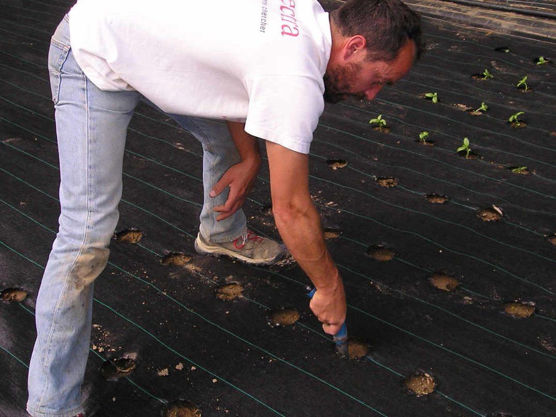 Plantes aromatiques et médicinales : Le repiquage des semis